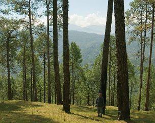 ranikhet-Almora,Uttarakhand