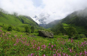 Valley of Flowers National Park – Rolling Meadows and Gushing Streams