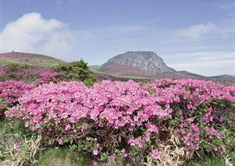 Visit South Korea's Jeju Island for a Real 'Natural' Experience