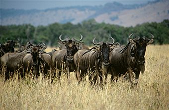 Maasai Mara – The Untamed Holiday Destination for an Unforgettable Experience