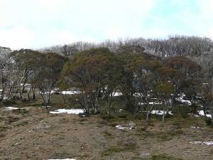 mawsons-huts-antarctica
