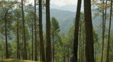 ranikhet-Almora-Uttarakhand
