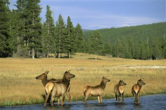 Yellowstone National Park – Take Your Family to the World's First National Park